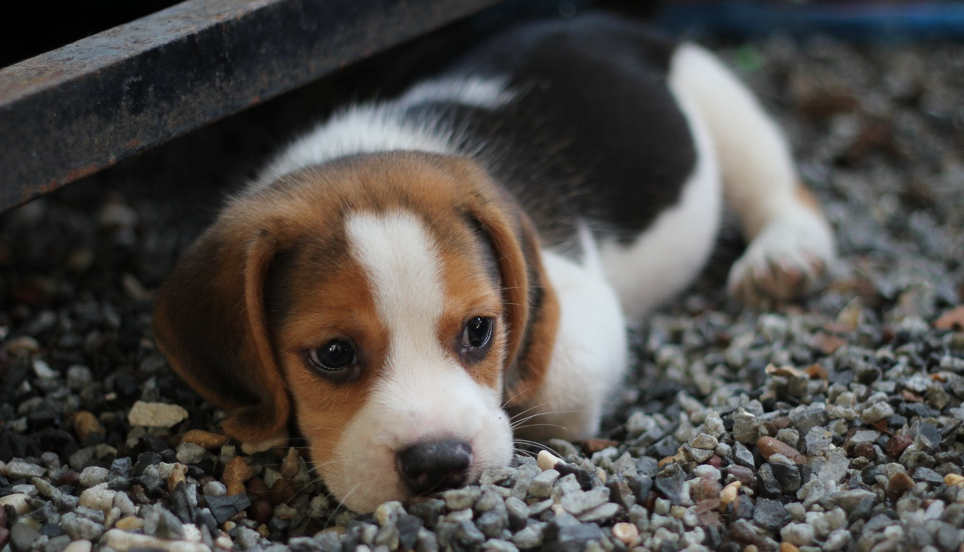 A sad-looking dog is something you can avoid if you take the time and prepare your pet for a move.
