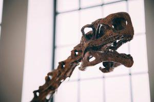 dinosaur skeleton in best museums in Toronto