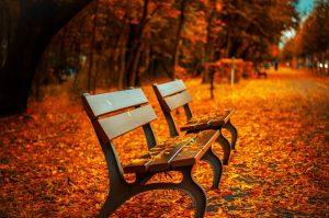 Two benches surrounded by autumn leaves.